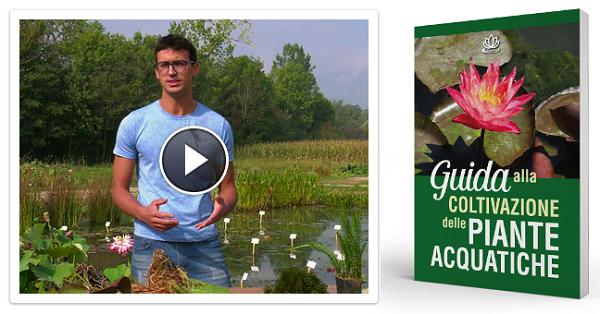 Guida alla Coltivazione delle Piante Acquatiche