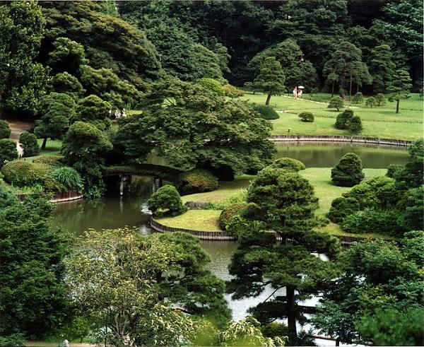 Piante acquatiche il giardino acquatico for Lanterne giardino zen