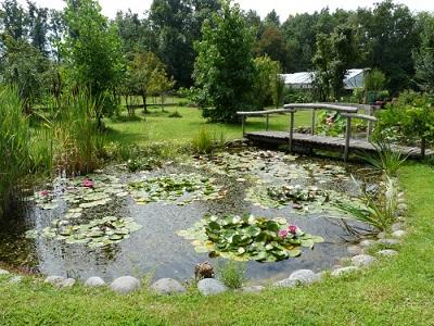 Piante acquatiche come realizzare un laghetto for Piante da laghetto ossigenanti