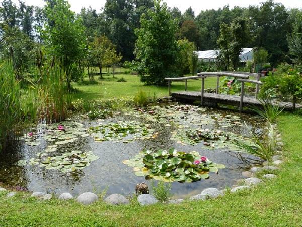 piante acquatiche i nostri laghetti