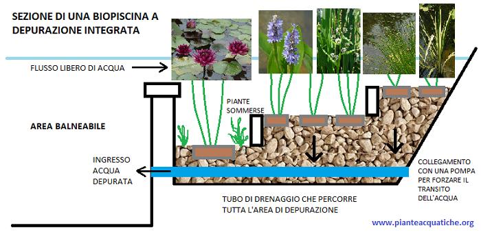 Piante acquatiche come realizzare una biopiscina for Sistema di filtraggio per laghetto