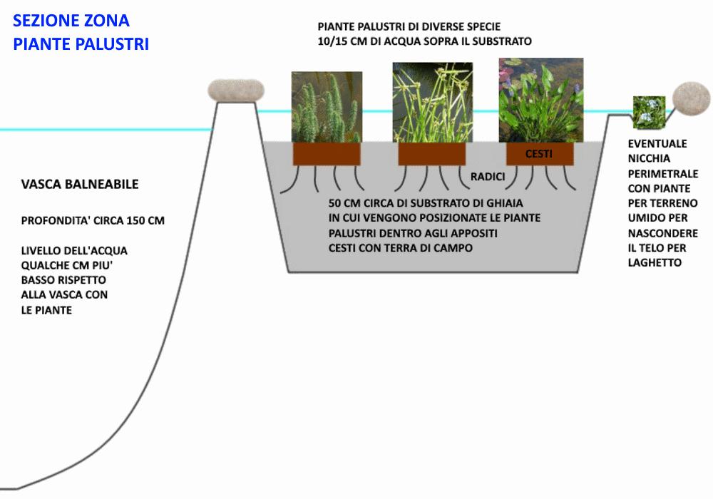 Piante acquatiche come realizzare una biopiscina for Attivatore fossa biologica fai da te